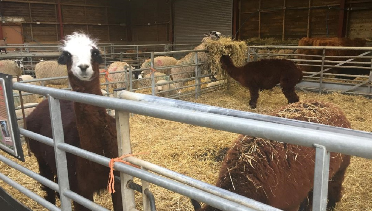 Our Review of Mead Open Farm