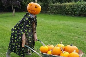 Pick your pumpkins at Millets